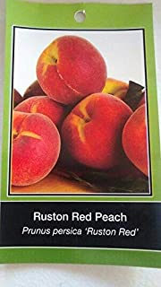4`-5` Ruston RED Peach Tree Live Healthy Trees Fruit Garden Plant Home Peaches
