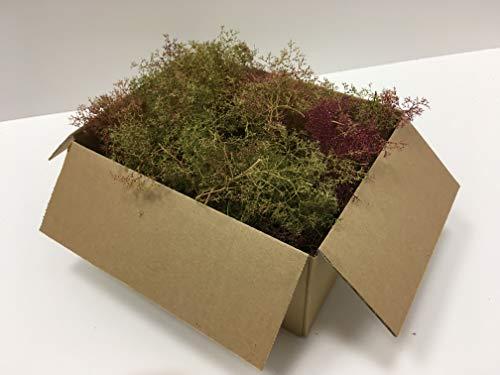 Seemoos/Meerschaum natur/grün-rötlich, Karton 22,5 x 18 x 12,6cm