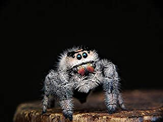 Photography Poster - Spider, Jumping, Web, Eyes, 24