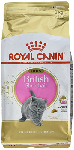 Royal Canin KITTEN British Shorthair Katzenfutter 2 kg, 1er Pack (1 x 2 kg)