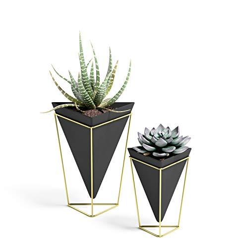 Umbra Trigg Übertopf und Wandvase für Zimmerpflanzen, Sukkulenten, Luftpflanzen, Kakteen, Kunstpflanzen und...
