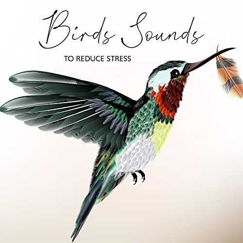 Birds Sounds to Reduce Stress – Beautiful Mother Nature Concert for Relief Depression and Anxiety, Therapy Music, Forget about Problems