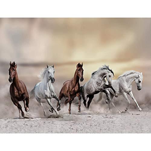 Fototapeten Pferde Wüste 352 x 250 cm - Vlies Wand Tapete Wohnzimmer Schlafzimmer Büro Flur Dekoration Wandbilder XXL Moderne Wanddeko - 100% MADE IN GERMANY - 9335011a