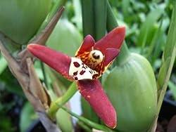 orchideen vermehren nicht ganz einfach garten mix. Black Bedroom Furniture Sets. Home Design Ideas