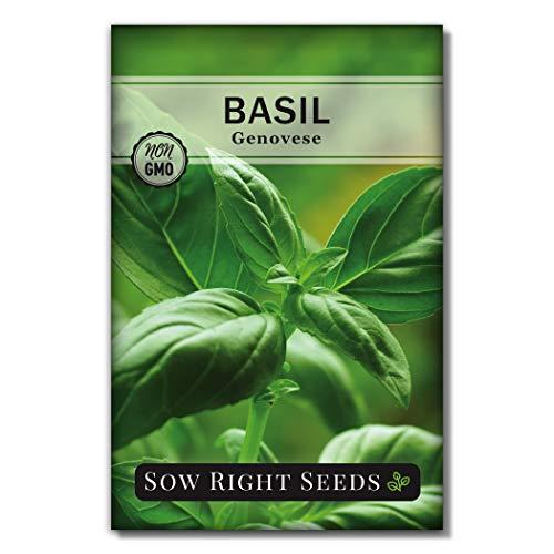播种正确的种子- Genovese罗勒种植种子-传家宝,非转基因植物种植和种植一个厨房香草花园,伟大的园艺礼物。每包最少500毫克。(1)