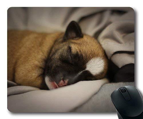 N\A Golden Retriever Cachorro de Perro, Cachorro Chihuahua Perro Linda y acogedora Mascota marrón pequeño, Alfombrilla de ratón para Perros