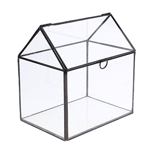 Baoblaze Glas Terrarium, Geometrisches Glasterrarium, Deko Pflanzgefäß, Pflanzer Tischplatte, Dekorative Blumentopf für Sukkulenten Farne Moose - durchsichtig, 155*110*163MM
