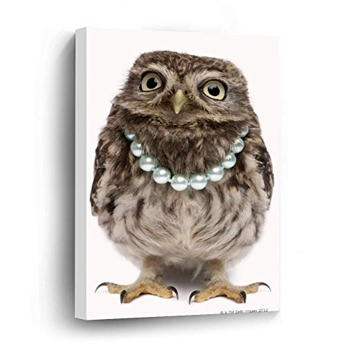 Front View of A Young Little Owl Wearing Canvas Picture Painting Artwork Wall Art Poto Framed Canvas Prints for Bedroom Living Room Home Decoration, Ready to Hanging 8'x12'