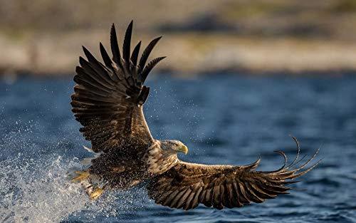 FAWFAW Puzles Adulto 300 Piezas, Águila Volando sobre El Río, Vida Silvestre, Juegos De Desafío Mental