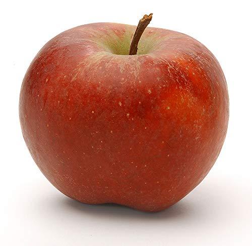 Obst & Gemüse Bio Apfel Gala (1 x 1000...
