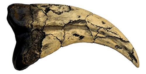Utahraptor Dinosaur Claw Replica - 7' - Museum Quality Cast Fossil Specimen