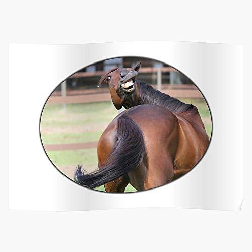 Animals Pets Nutrition My Little Last Selfie Donkey Pony Unicorn Horse War El póster de decoración de interiores más impresionante y elegante disponible en tendencia ahora