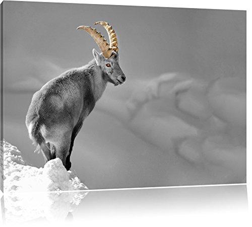 schöner Steinbock im Schnee schwarz/weiß Format: 120x80 auf Leinwand, XXL riesige Bilder fertig gerahmt mit Keilrahmen, Kunstdruck auf Wandbild mit Rahmen, günstiger als Gemälde oder Ölbild, kein Poster oder Plakat