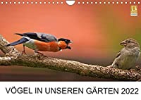 Voegel in unseren Gaerten 2022 (Wandkalender 2022 DIN A4 quer): Heimische Vogelarten in unseren Gaerten. Fotografiert von Lutz Klapp. (Monatskalender, 14 Seiten )