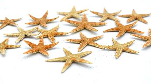DEKOSTERN Echte Mini Seesterne 15 Stück Maritime Deko Streudeko Tischdeko 2,5 cm zum Basteln & Dekorieren