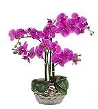 Kunstpflanze Orchidee XL mit Keramiktopf - ca. 53cm hoch lila Blüte - Silber Topf