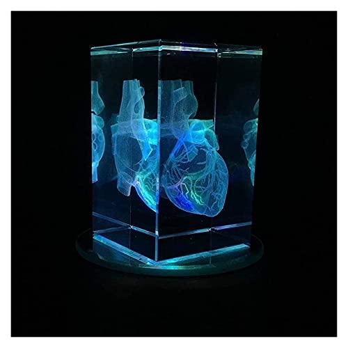 JKFZD 3D-menschliches Herz-Modell 3D-Kristall-Papier-Papier-humanisches Herz-anatomisches Modell im Kristallglaswürfel-Bildungsmodell (Size : 3.1x2x2in)
