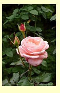Pink Rose 2015 Weekly Calendar: 2015 week by week calendar with a cover photo of a pink rose