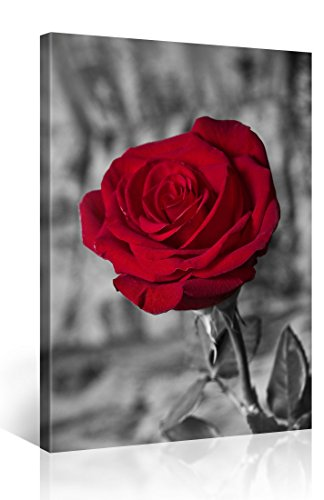 Foto en lienzo ROTE ROSE 2 Impresión artística en lienzo, creado por Tom Harris, Cuadros en lienzo previamente fijados, listos para ser colgados. AmazonES - Comparable con un cuadro al óleo - y no a un póster o cartel 100x75cm #e3091