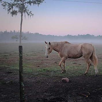 Sweetheart I am just an honest cowboy