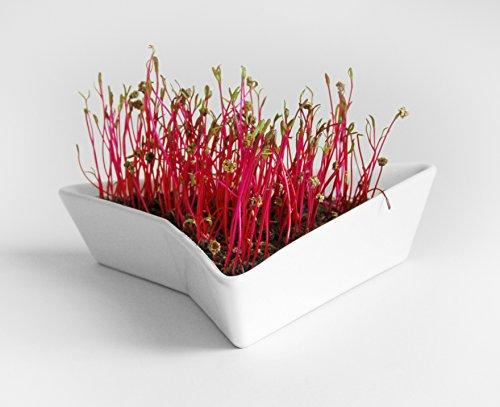 Mr. Sprouty, Premium Set: Keramik Keimgerät + Sprossen Samen (5g) + Filzhut; für Sprossenzucht, Intelligentes Design, Einfache Bedienung, Innovative Form, Hochwertige Materialien