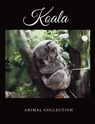 Koala: Animal Notebook, Journal, Diary (110 Pages, Quad Ruled 5 squers per inch, 8,5 x 11)