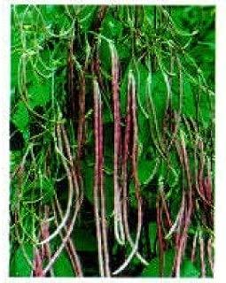 Heirloom Asian Mosaic Yard Long Bean Seeeds by Stonysoil Seed Company