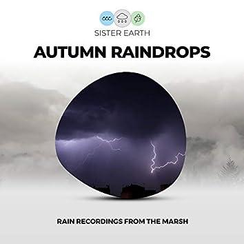 Autumn Raindrops: Rain Recordings from the Marsh
