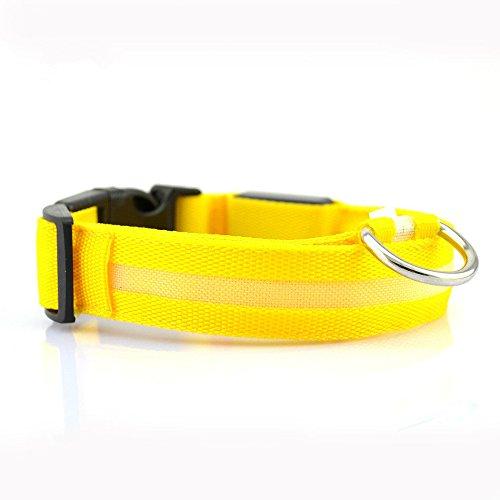 Winnes LED Hundehalsband mit USB Wiederaufladbar Blinkender LED Hunde Sicherheits Halsband Nacht Hundeband für Hunde, Haustier (S 2.5cm X (35cm-43cm), Gelb)