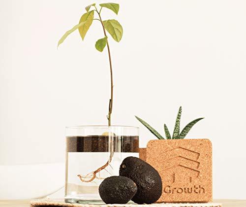 InGrowth Garten-Set für den Innenbereich zum Keimen und Pflanzen Ihres Avocadobaums | Umweltfreundliches Kork-Set zur Dekoration | originelles Geschenk für Avocado- und Umwelt-Fans | Kit Experience