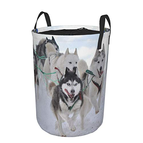 MEJX Collapsible Large Clothes Hamper for Household,Musher Hiding Behind Sleigh At Sled Dog Race On Snow In Winter,Storage Bin Laundry Basket Waterproof with Drawstring,16.5' x 21.6'