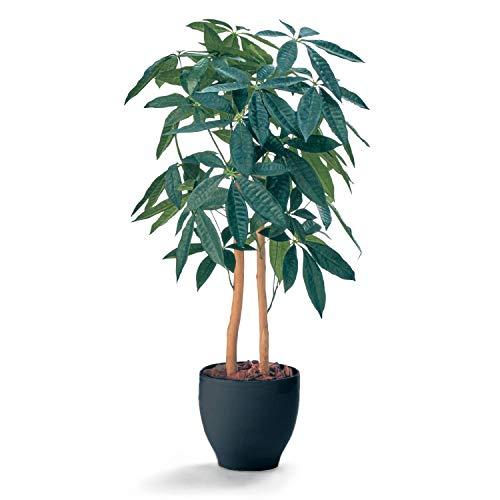 [ベルメゾン] フェイクグリーン 消臭 人工観葉植物 パキラ(鉢ブラック)