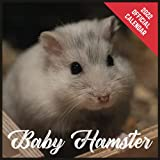 Calendar 2022 Baby Hamster: Baby Hamster Official 2022 Monthly Planner, Square Calendar with 19 Exclusive Baby Hamster Photoshoots from July 2021 to December 2022
