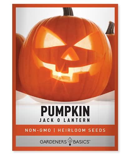 Pumpkin Seeds for Planting (Jack O Lantern) Heirloom, Non-GMO Vegetable Variety- 2 Grams Seeds Great for Summer Pumpkin Gardens by Gardeners Basics