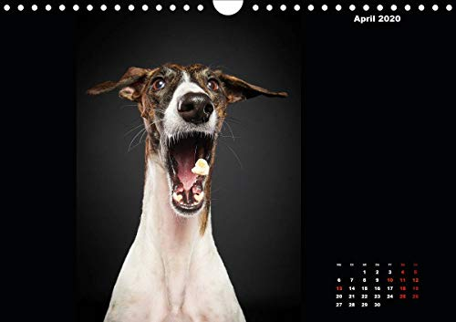 『Gier, M: Stimme der Windhunde (Wandkalender 2020 DIN A4 quer』の5枚目の画像