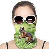 WH-CLA Ardilla Linda Cuello Bufanda Protección UV Polainas De Cuello Elástico Bandana Hombre Mujer Calentador De Cuello Antideslizante Sombreros para Ciclismo Partido Senderismo
