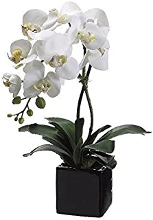 Best allstate floral orchid Reviews