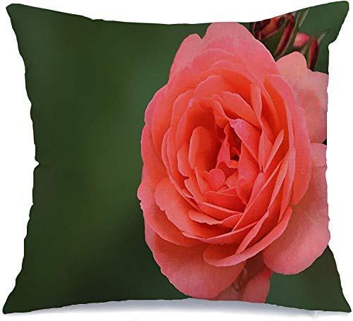 Throw Pillow Cover Valentine Leaf Splendid Flower Pale Natural Pink Color Rose On, Decoración para el hogar Fundas de Almohada Fundas de cojín, Funda de Almohada 18 'x18'