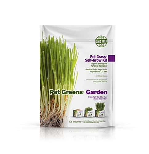 Bell Rock Growers Pet Greens Pet Grass Organic Wheatgrass Self Grow Kit, Contains Soil Mixture and Seed Packet
