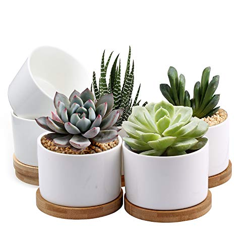 Succulent Pots, ZOUTOG White Mini 3.15 inch Ceramic Flower Planter Pot with Bamboo Tray, Pack of 6 -...