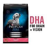 Purina Pro Plan Dry Puppy Food, FOCUS Lamb & Rice Formula - 34 lb. Bag