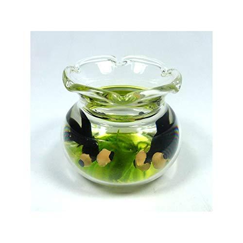 Unbekannt Creal 77020 Miniatur Aquarium rund 1:12 für Puppenhaus