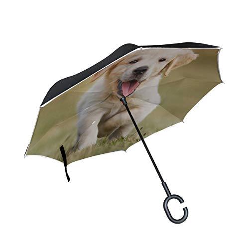 Paraguas Plegable Viaje invertido Doble Capa Paraguas