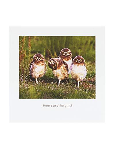UK Greetings Comedy Wildlife Photography Awards – Lustige Tier-Geburtstagskarte – Ideale Geburtstagskarte für Sie, Geburtstagskarte für Ihn, humorvolle Geburtstagskarte – Getting Old