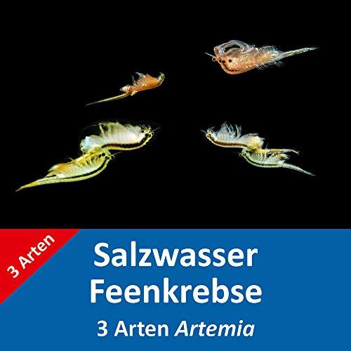 AQ4Aquaristik Salzwasser-Feenkrebse - 3 Arten im Set - je etwa 1.000.000 Urzeitkrebs-Eier - Artemia franciscana, A. parthenogenetica und A. cf. persimilis - mit Anleitung