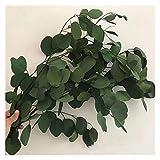 KXLB Kxlbhjxb 80 g/Lot, Natural preservado Hojas de eucalipto Bouquet, Eterna de Flores secas for la Boda decoración del hogar Accesorios, Visualización de la Flor Flores secas (Color : Green)