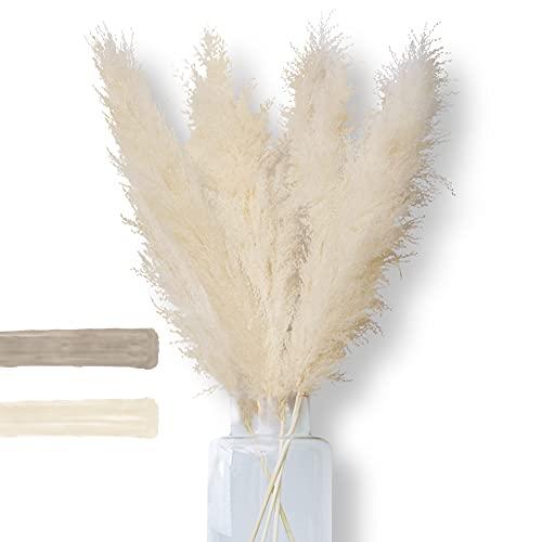 SOBELL - Premium Pampasgras - natürlich echter Trockenblumenstrauß - groß, XXL Pampasgras - extra fluffig Trockenblumen als Deko für Inneneinrichtung (weiß/beige)