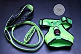 LED Dog Leash and Harness Set - USB Rechargeable - Makes Your Dog Visible, Safe & Seen (Medium, Green)