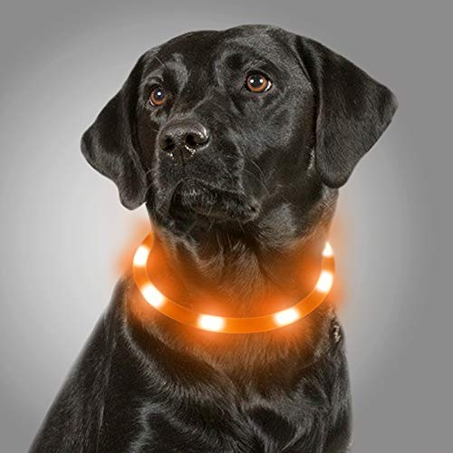 Joytale Collar Luminoso Perro, Collar para Mascotas LED Ajustables con Luz, Collares Recargable USB para Perros Pequeños, Medianos y Grandes, Naranja