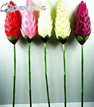 VISTARIC Gris clair: Free Ship Bleu Gentiane Graines de fleurs 50 Pcs Novel Plante vivace Facile à cultiver Flower Garden Accueil Regarder Vente Graine Flores Japon